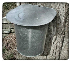Maple bucket
